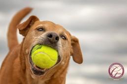 Katrina Wilson Dog Photographer -_