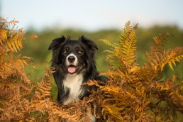 Katrina Wilson Dog Photographer Bedfordshire UK