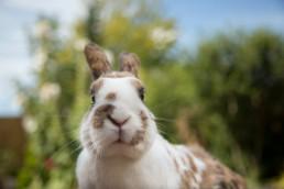 Katrina Wilson - Animal Photographer Bedfordshire