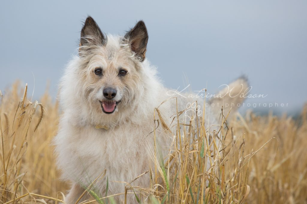 Dog Photographer Bedfordshire-1