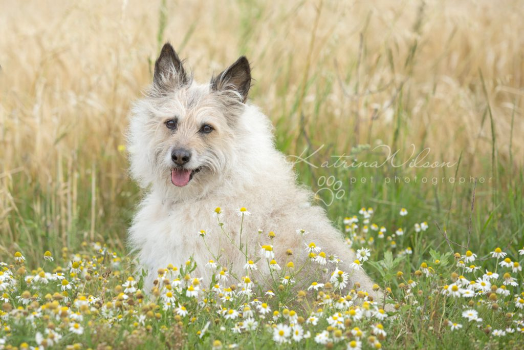Dog Photographer Bedfordshire-2