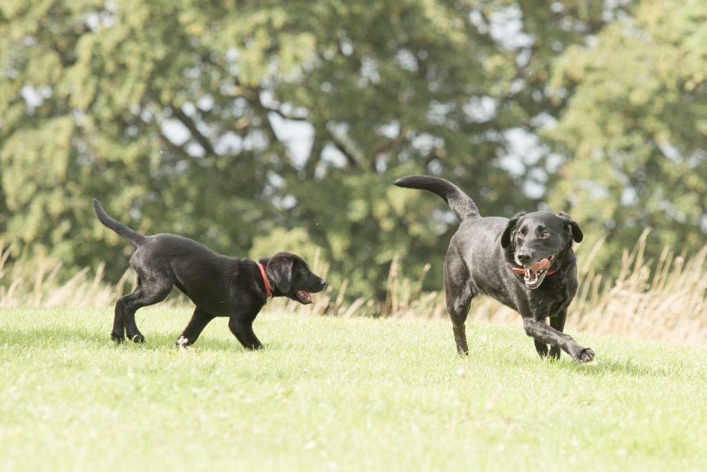 Blitz - Dog Photographer Bedfordshire-1-3