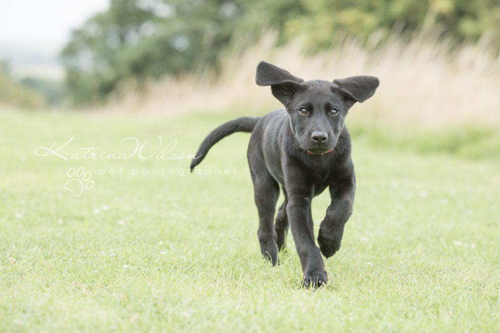 Blitz - Dog Photographer Bedfordshire-1-6