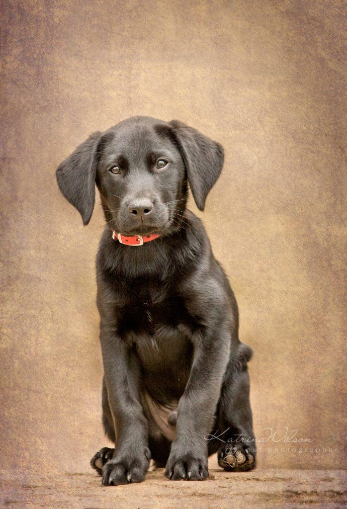 Blitz - Dog Photographer Bedfordshire-1-8