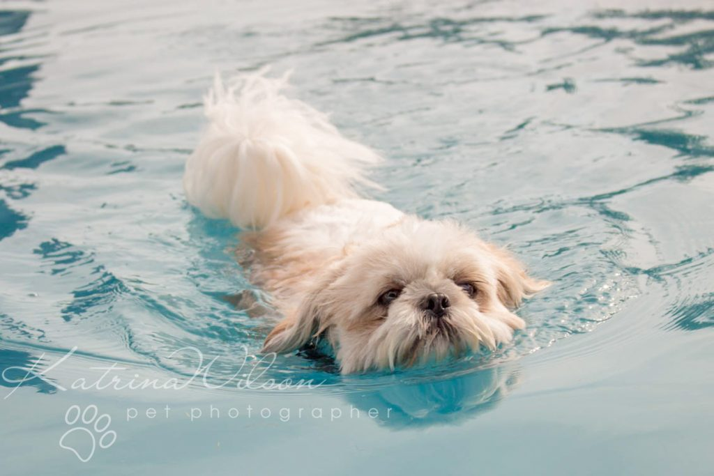 K9 Aqua Dock Diving - Dog Photographer Bedfordshire-3