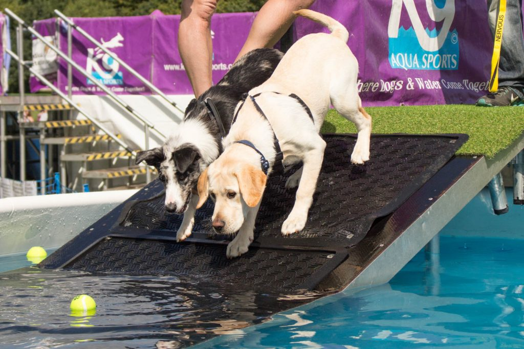 http://www.katrinawilsonphotography.co.uk/wp-content/uploads/2017/08/K9-Aqua-dock-diving-dog-photographer-Bedfordshire-3.jpg