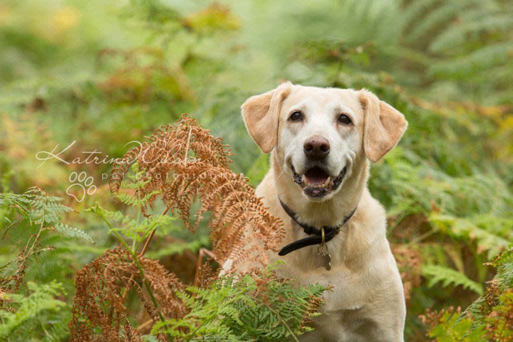 Tink - Dog photography Bedfordshire-1