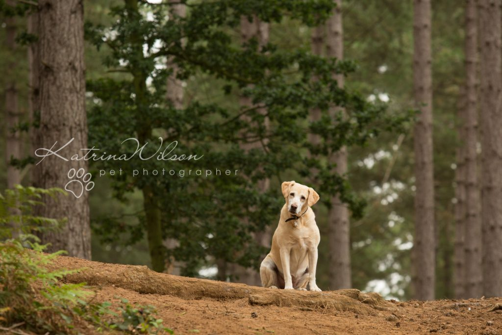 Tink - Dog photography Bedfordshire-2
