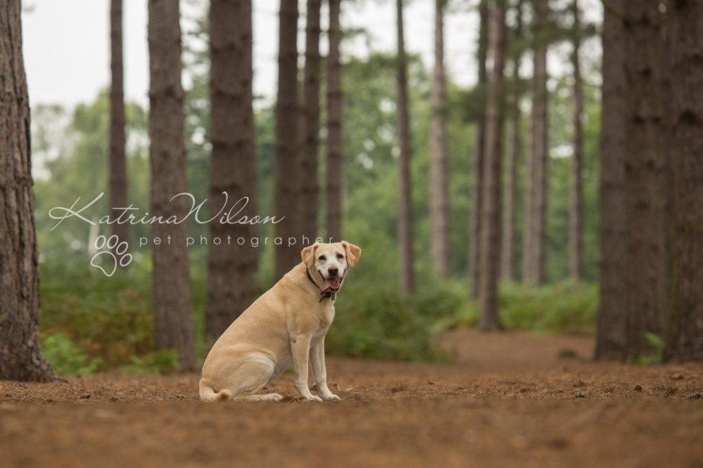 Tink - Dog photography Bedfordshire-3