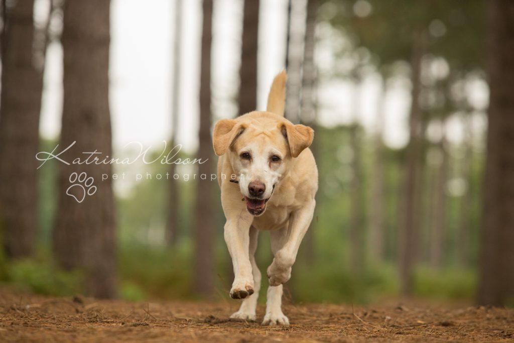 Tink - Dog photography Bedfordshire-4