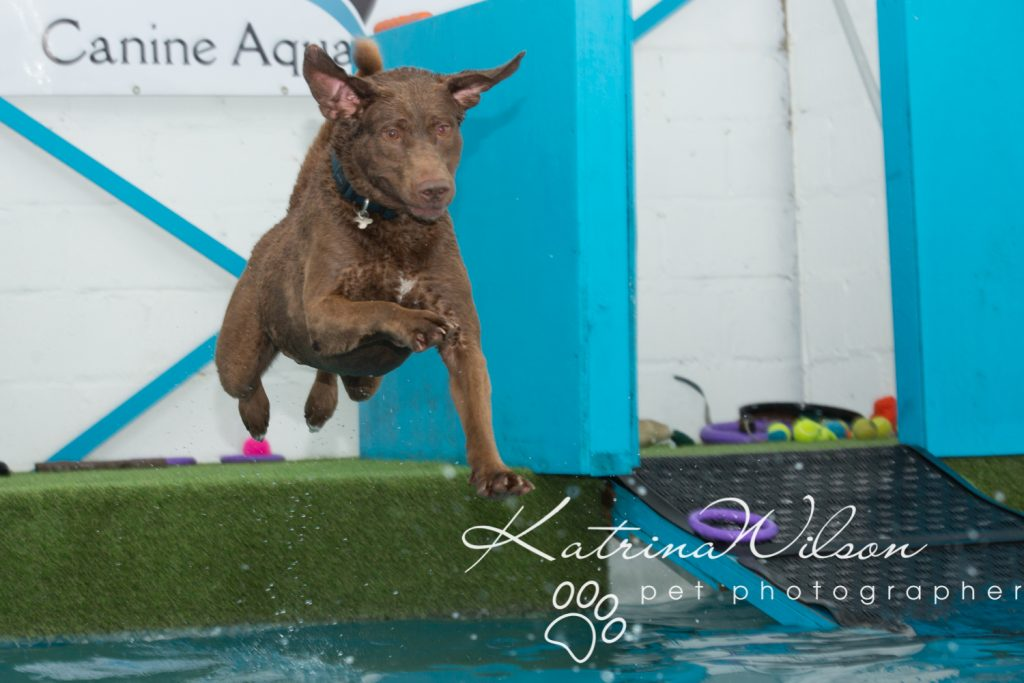 Kaiden Swim Session - Dog Photographer Bedfordshire-3
