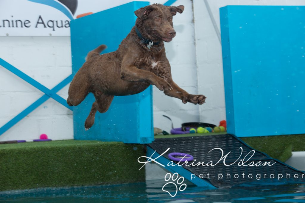 Kaiden Swim Session - Dog Photographer Bedfordshire-5