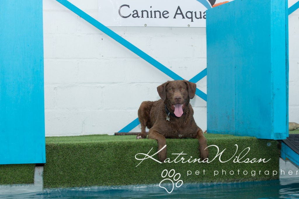 Kaiden Swim Session - Dog Photographer Bedfordshire-6