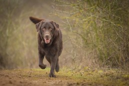 Top 100 Dog Breeds - Dog Photographer Bedfordshire_-10