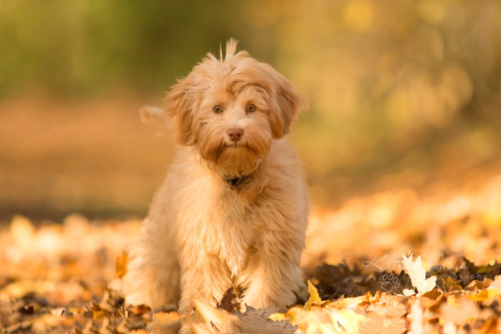 Top 100 Dog Breeds - Dog Photographer Bedfordshire_-11
