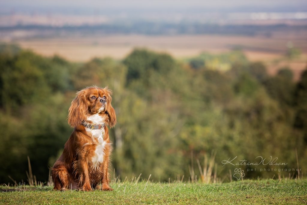 Top 100 Dog Breeds - Dog Photographer Bedfordshire_-3