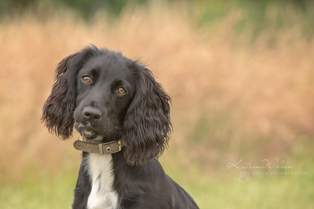 Top 100 Dog Breeds - Dog Photographer Bedfordshire_-6