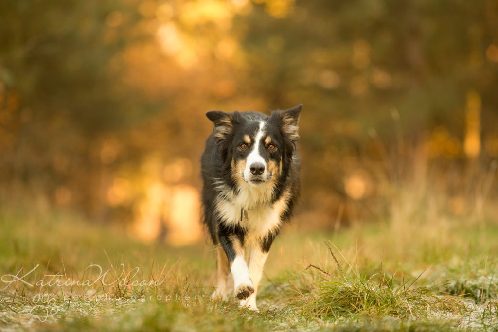 Top 100 Dog Breeds - Dog Photographer Bedfordshire_-7