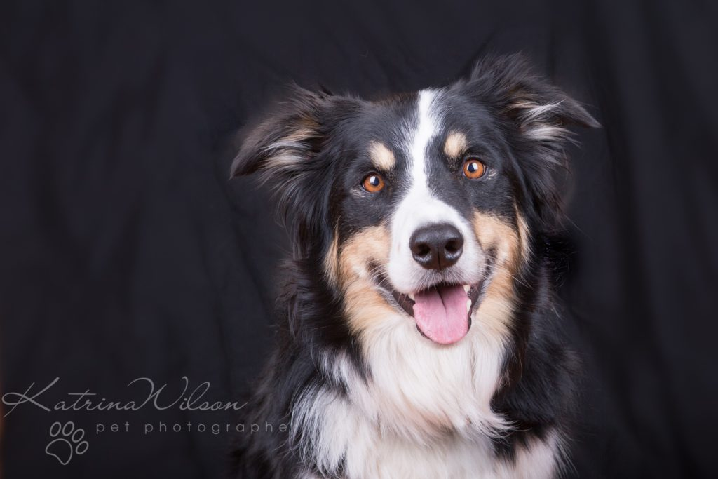 10 things to consider when choosing a pet photographer - Dog Photographer Bedfordshire-2