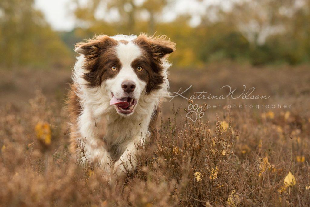 Dog Photographer Bedfordshire - Top 5 Bedfordshire Dog Walks-136