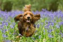Dog Photographer Bedfordshire - top 5 walks