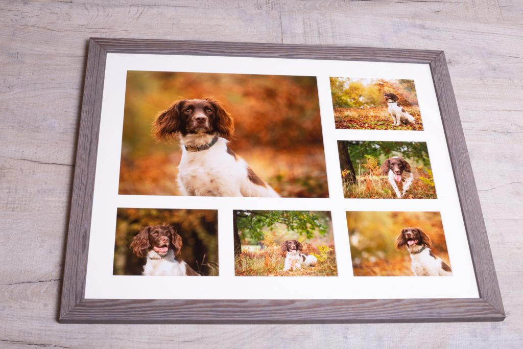 Springer Spaniel Photo Session - Katrian Wilson Dog Photographer Bedfordshire-1-2