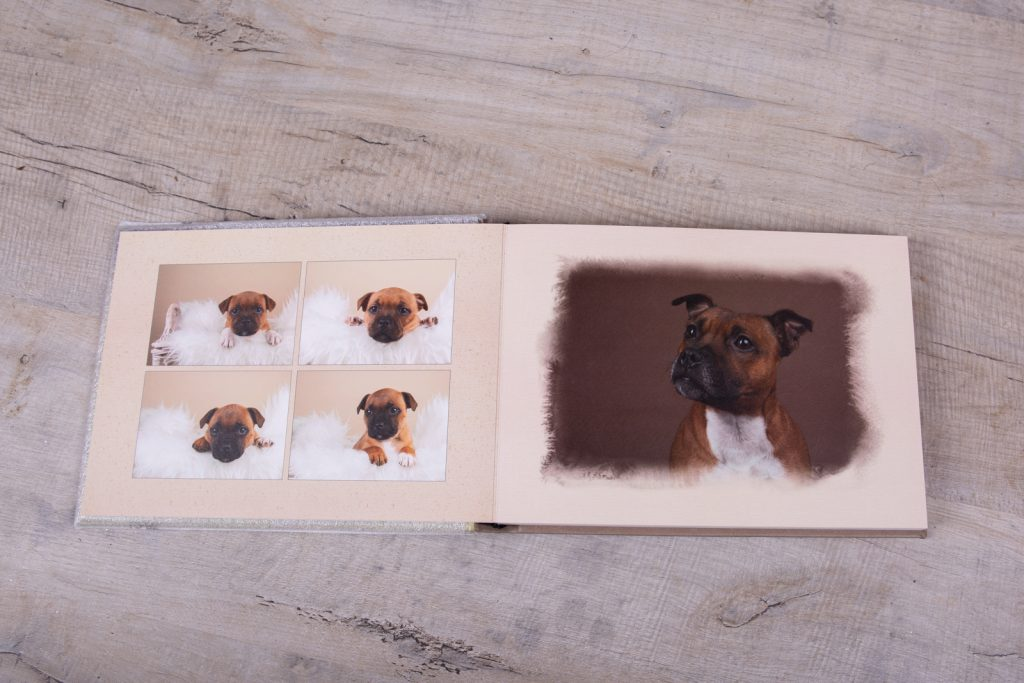 Staffordshire Bull Terrier Puppies - Katrina Wilson Dog Photographer Bedfordshire-45