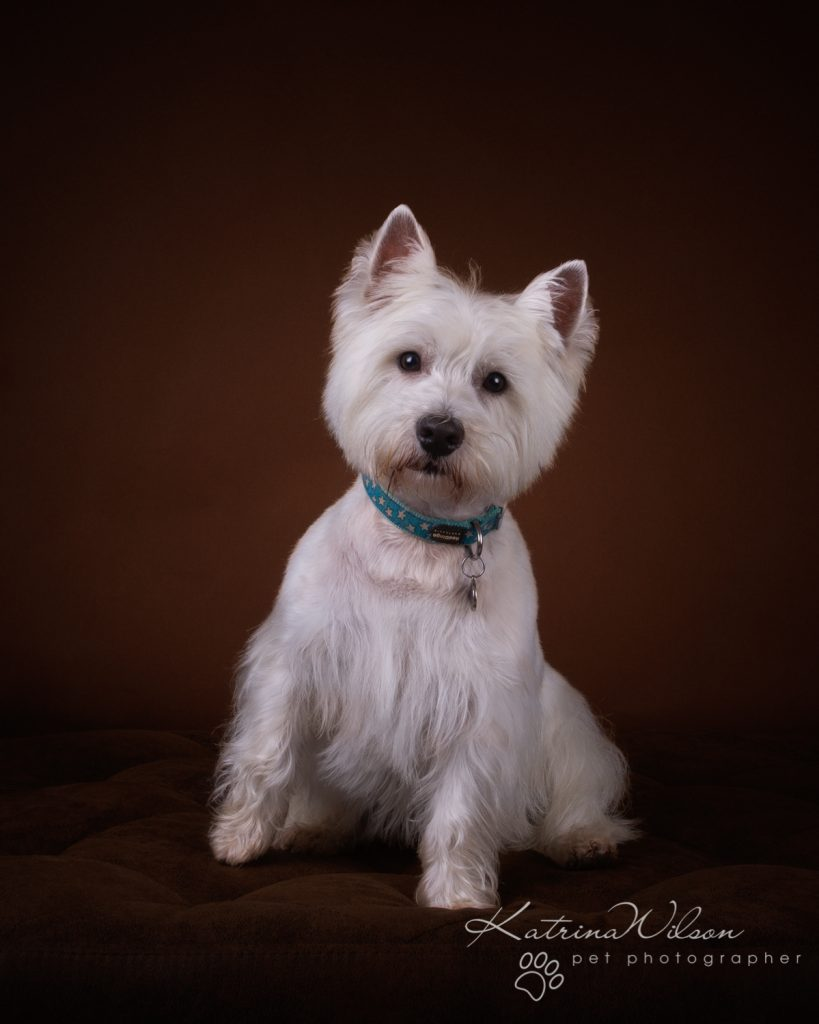 Katrina Wilson Dog Photography Bedfordshire Top 10 New Year Resolutions you should make with your dog-1-8