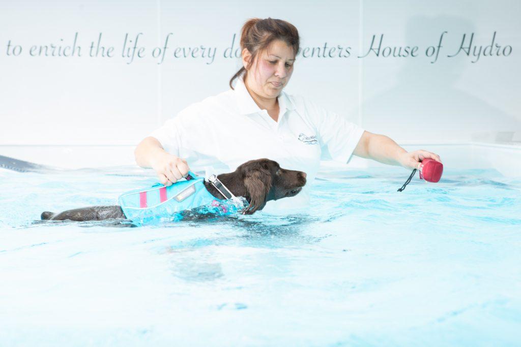 House of Hydro - Katrina Wilson Dog Photography Bedfordshire-12