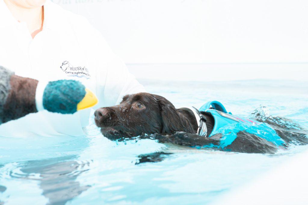 House of Hydro - Katrina Wilson Dog Photography Bedfordshire-14