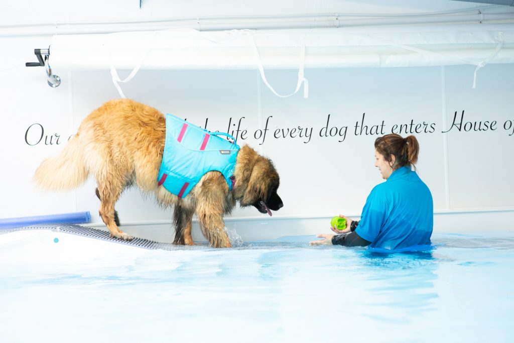 House of Hydro - Katrina Wilson Dog Photography Bedfordshire-3