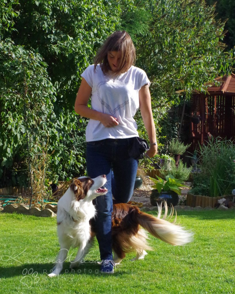 10 things my dog has taught me - Border Collie - Katrina Wilson Dog Photography Bedfordshire-12