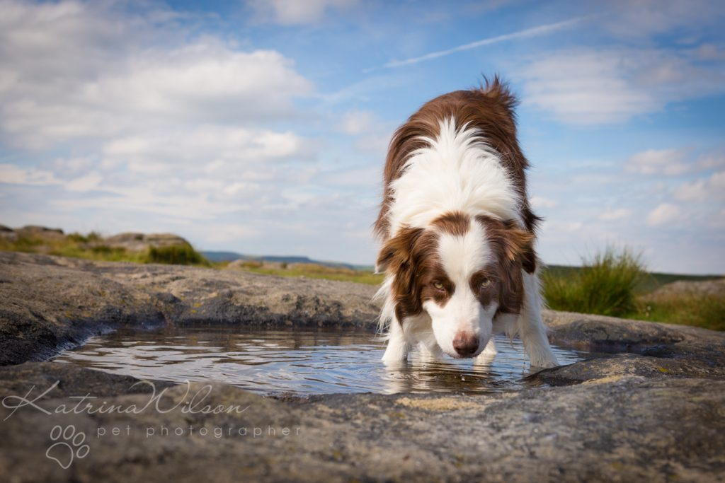 10 things my dog has taught me - Border Collie - Katrina Wilson Dog Photography Bedfordshire-5