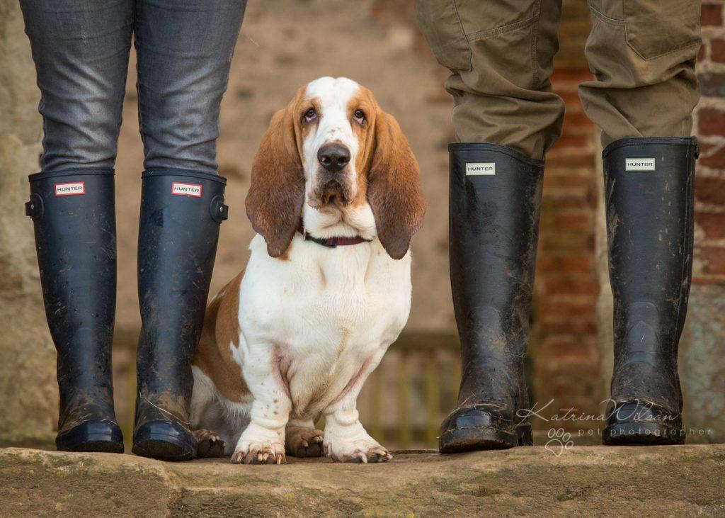 How dogs improve your mental health - Katrina Wilson Dog Photographer Bedfordshire-11