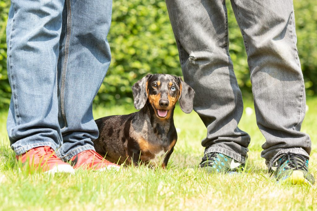 How dogs improve your mental health - Katrina Wilson Dog Photographer Bedfordshire-12