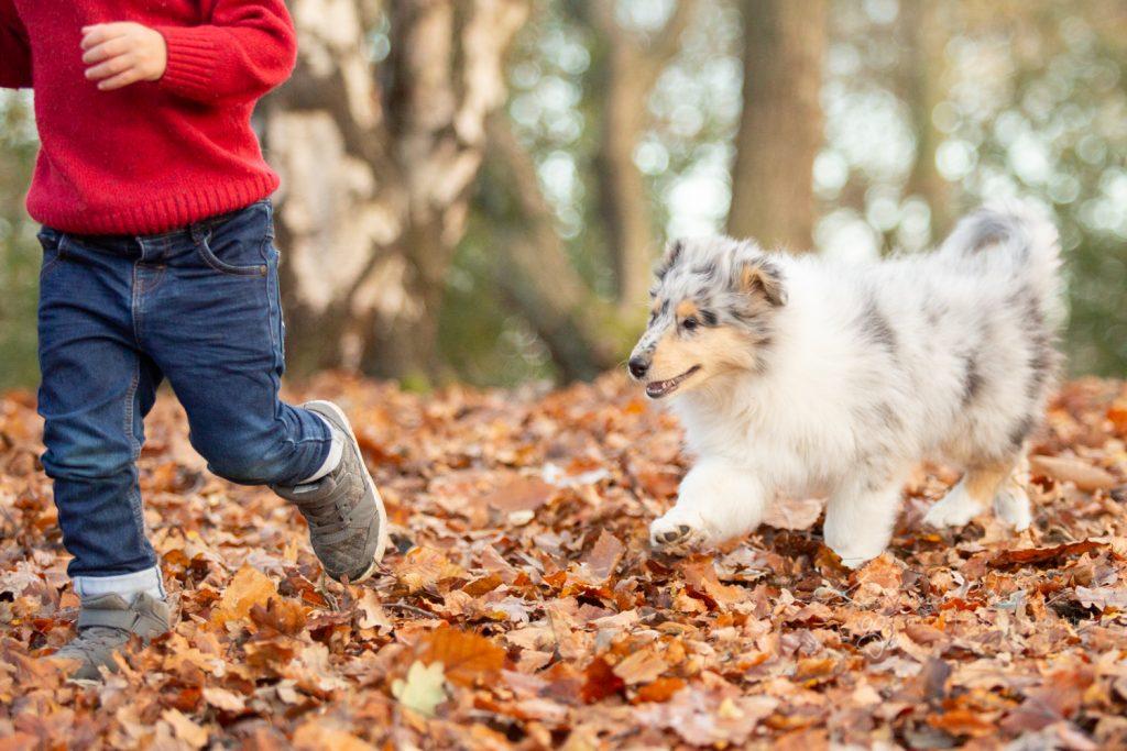 How dogs improve your mental health - Katrina Wilson Dog Photographer Bedfordshire-14