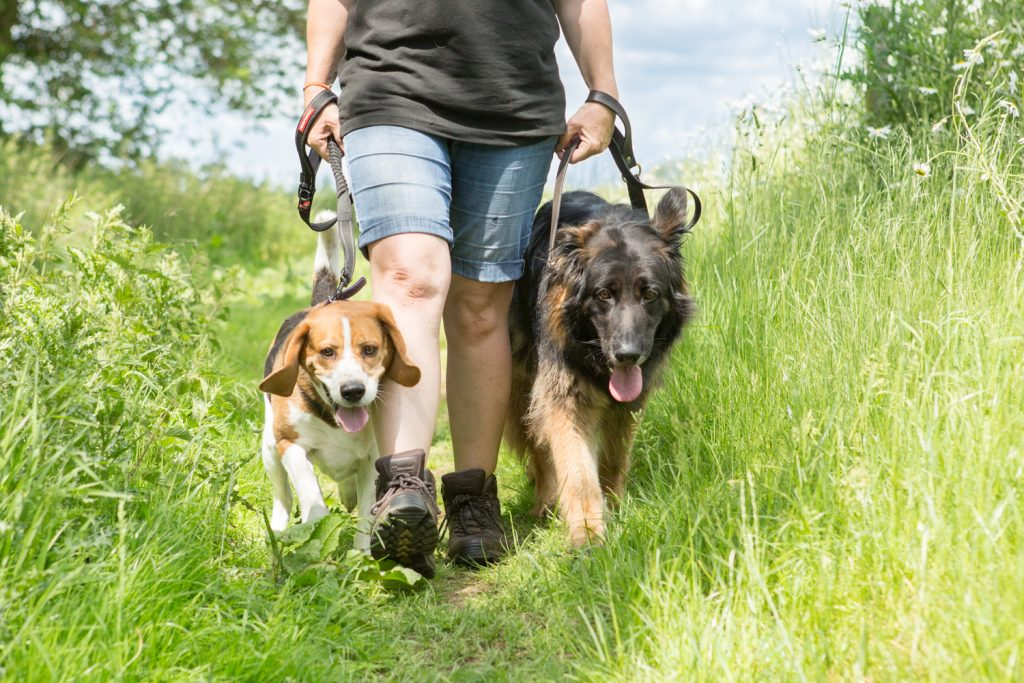 How dogs improve your mental health - Katrina Wilson Dog Photographer Bedfordshire-16