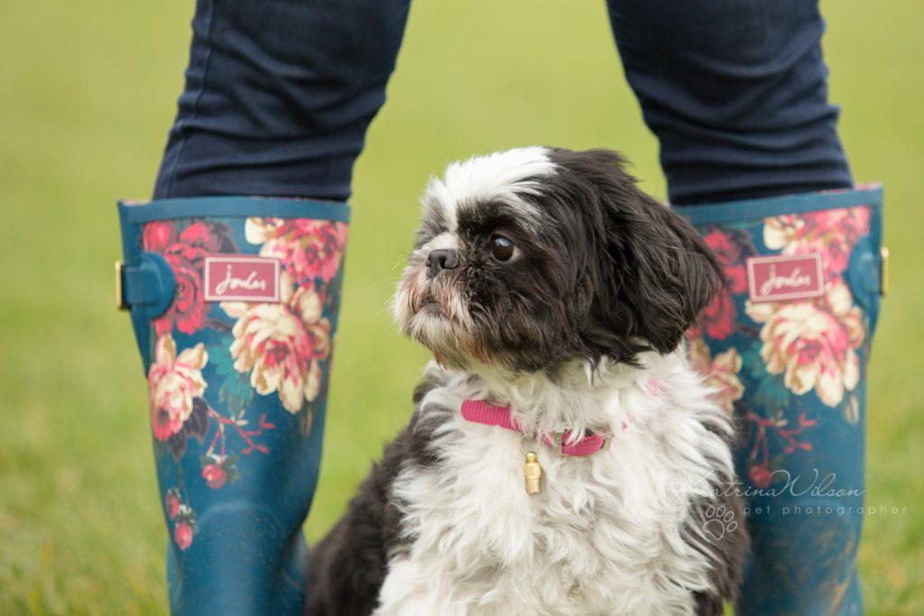 How dogs improve your mental health - Katrina Wilson Dog Photographer Bedfordshire-2