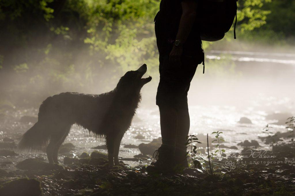 How dogs improve your mental health - Katrina Wilson Dog Photographer Bedfordshire-5