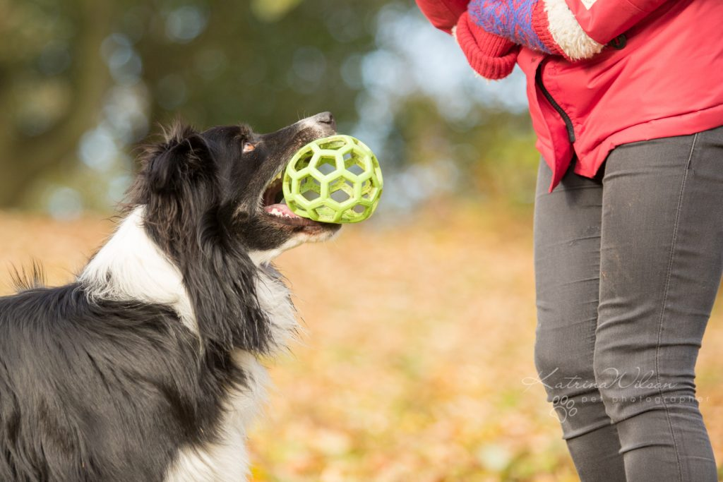 How dogs improve your mental health - Katrina Wilson Dog Photographer Bedfordshire-6