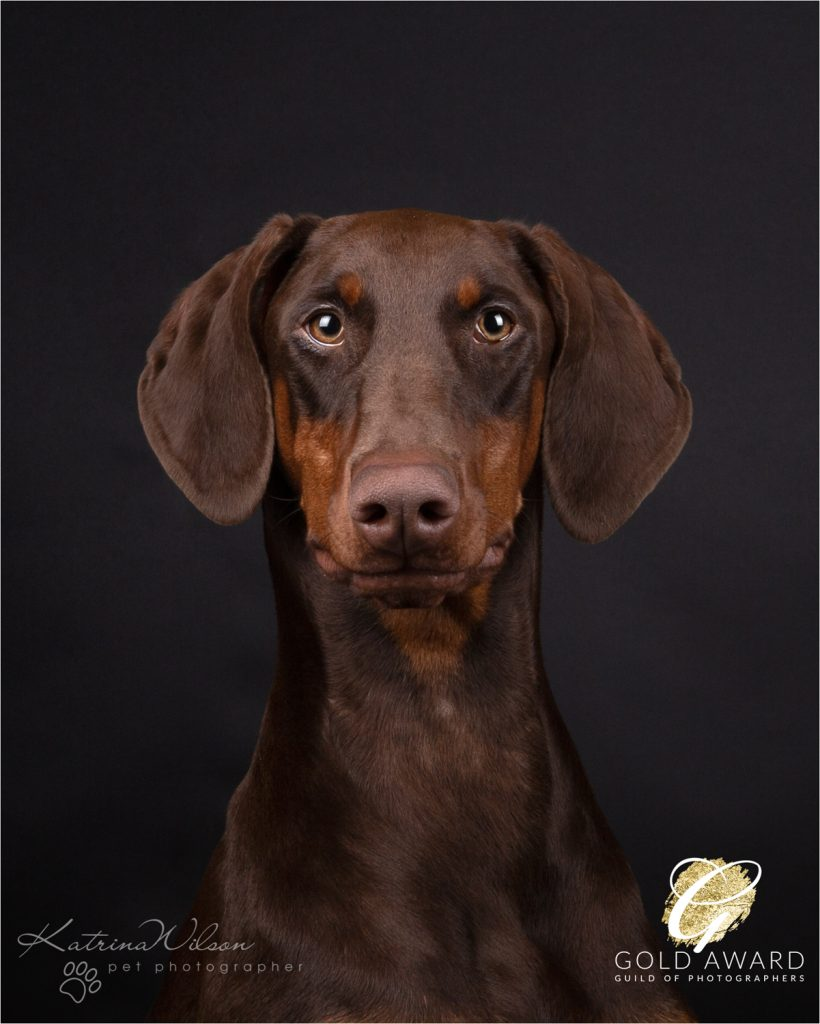 Guild of Photographers - Katrina Wilson Dog Photography Bedfordshire-12
