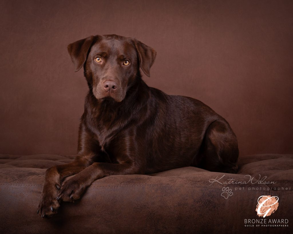 Guild of Photographers - Katrina Wilson Dog Photography Bedfordshire-6