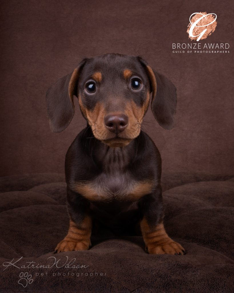 Guild of Photographers - Katrina Wilson Dog Photography Bedfordshire-9