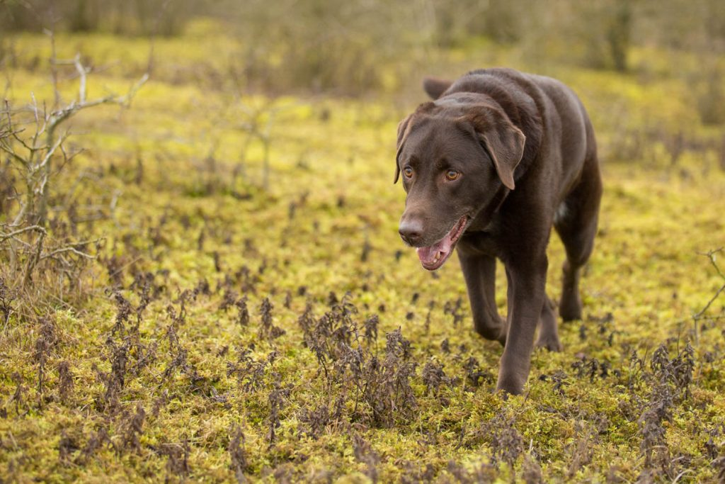 plants that are toxic to dogs-1-3