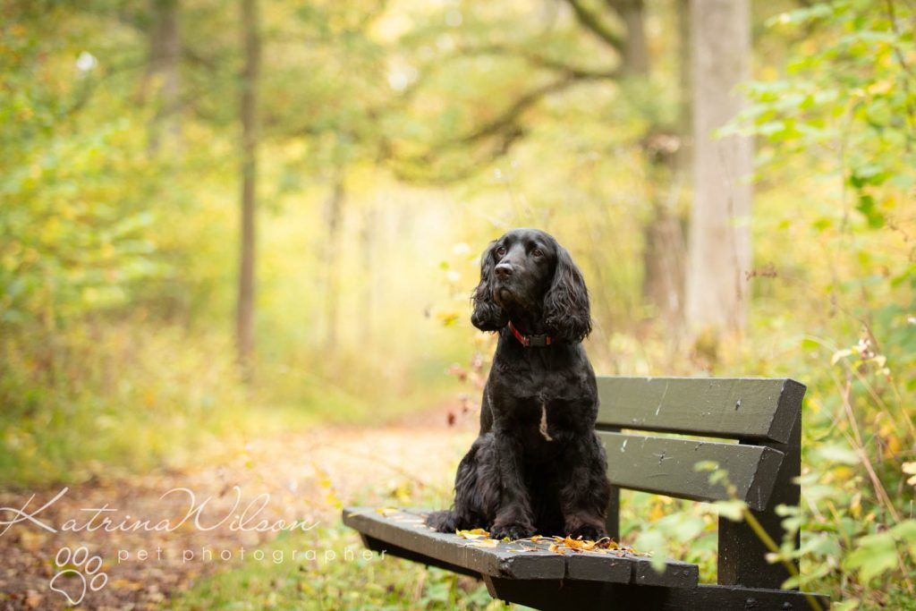 National Black Dog Day - Katrina Wilson Dog Photography-10