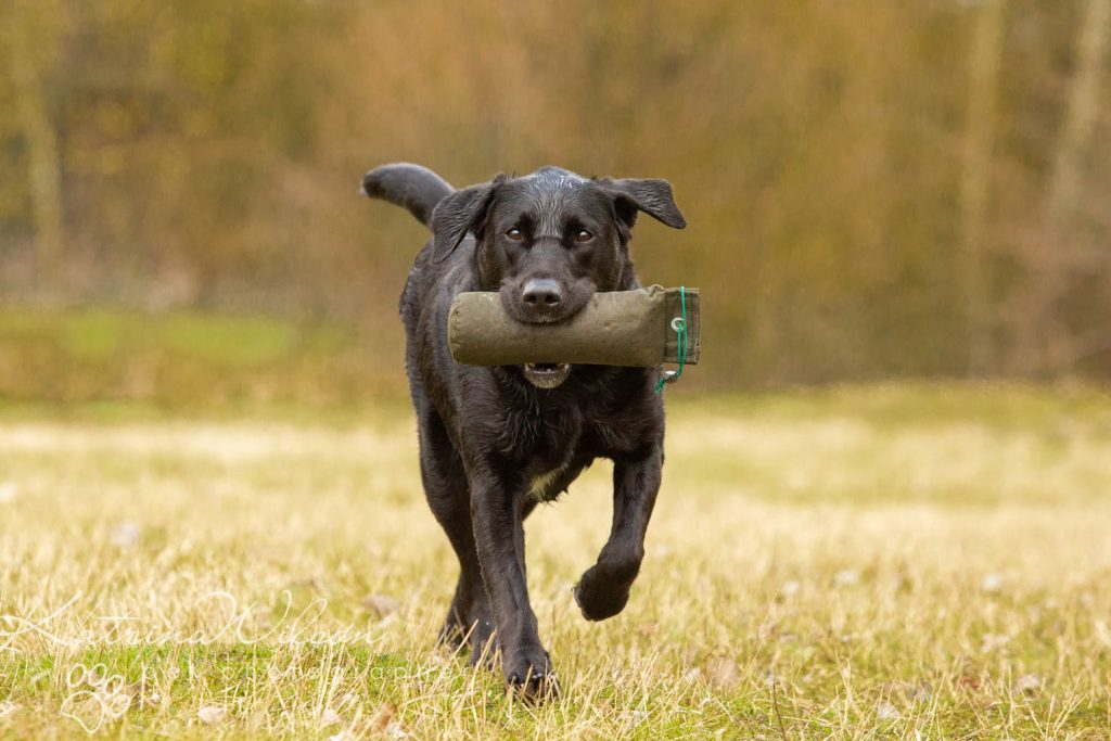 National Black Dog Day - Katrina Wilson Dog Photography-14
