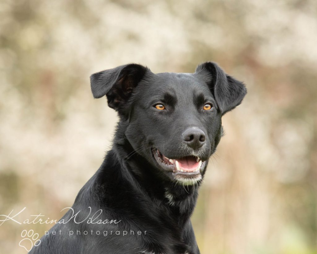 National Black Dog Day - Katrina Wilson Dog Photography-16