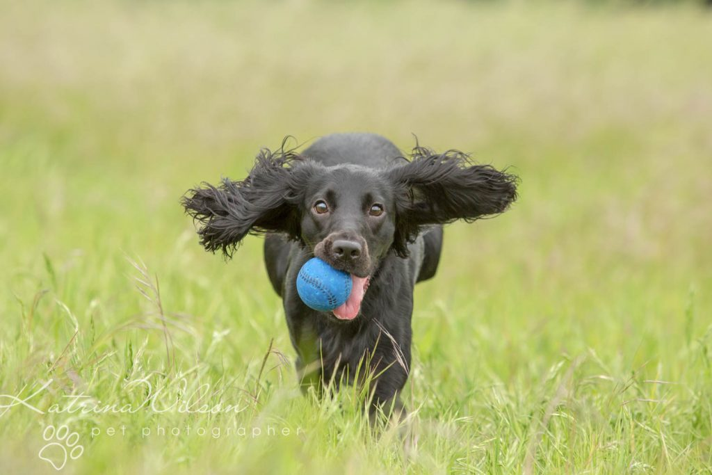 National Black Dog Day - Katrina Wilson Dog Photography-2