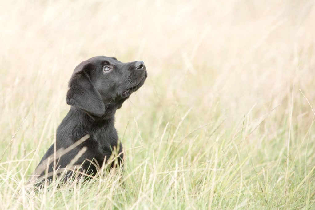 National Black Dog Day - Katrina Wilson Dog Photography-6