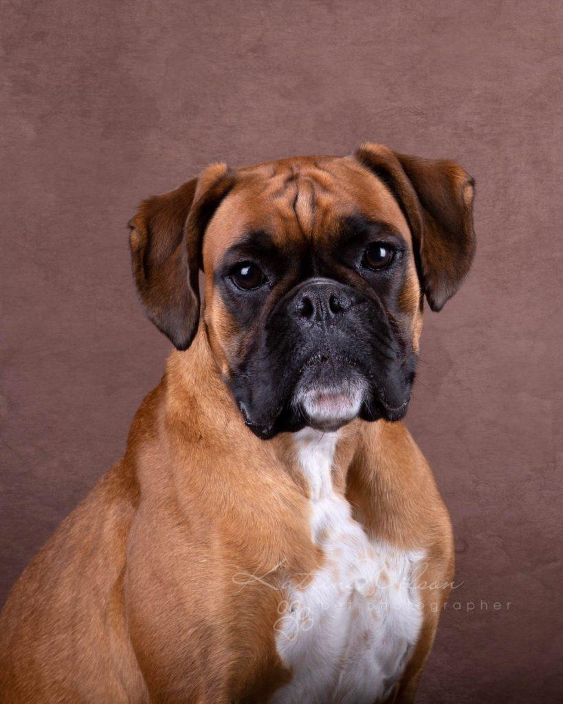 Award Winning Dog photographer Bedfordshire - Katrina Wilson-11
